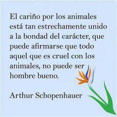 El cariño por los animales está tan unido a la bondad que puede afirmarse que aquel que es cruel con los animales no es hombre bueno. Arthur Shopenhauer. ¡Buenas noches!