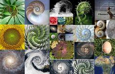 Зашифрованный закон природы