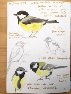 My Sketchbook in January 2019 Watercolor Bird, Watercolor Animals, Watercolor Paintings, Bird Illustration, Floral Illustrations, Small Paintings, Bird Paintings, Nature Sketch, Nature Journal