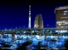 100,000 LED lights float down the Sumida River  As part of the recent Tokyo Hotaru Festival, 100,000 illuminated blue LEDs were released in the Sumida River. The massive installation of solar-powered spheres was meant to mimic a swarm of fireflies that twisted and bobbed along the river by moonlight. For those of you worried about pollution or safety, the lights were later caught downstream by giant nets.