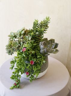 Monday Friday, You Choose, Florals, Succulents, Delivery, Canning, Heart, Plants, Floral