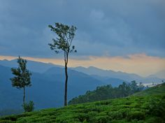 The hues of sunset at Madulkelle tea estate, in Sri Lanka's hill country.