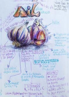 A-ail-dessin-blog-recette-renata-1l