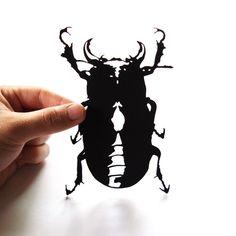 Beetle hand-cut paper silhouette by Papercuts by Joe