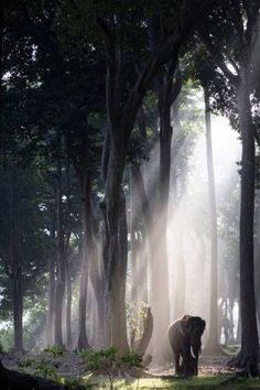このピンは Angela Clark-Grundy さんが見つけました。あなたも Pinterest で自分だけのピンを見つけて保存しましょう! | elephants、forests、lightsをもっと見る。