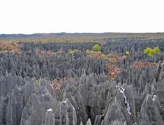The Stone Forest, Madagascar | 28 Incredibly Beautiful Places You Won't Believe Actually Exist