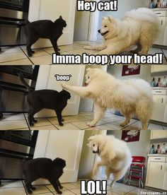 Funny dogs & Dog memes hilarious can't stop laughing Funny animal pictures& fun. Funny Dog Memes, Funny Animal Memes, Cute Funny Animals, Funny Animal Pictures, Cat Memes, Funny Cute, Dog Pictures, Funniest Memes, Funny Photos