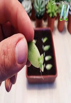 Best 9 Propagating succulents can be much easier than it seems with these simple steps! – Page 813462751424055093 – SkillOfKing. Growing Plants, Growing Vegetables, Garden Crafts, Garden Projects, Succulents Garden, Planting Flowers, Propagating Succulents, Container Gardening, Gardening Tips