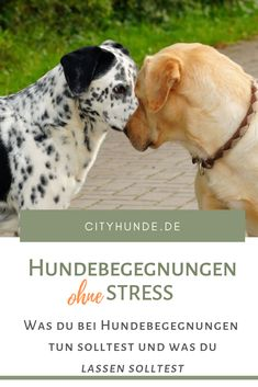 Dog encounters stress free - Dog encounters are a normal part of walking and walking around. Unfortunately, many dogs react aggr - Animals And Pets, Funny Animals, Cute Dogs Breeds, Dog Language, Pet Costumes, Free Dogs, Exotic Fish, Family Dogs, Dog Accessories