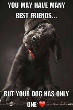 dog training,teach your dog,dog learning,dog tips,dog hacks I Love Dogs, Puppy Love, Cute Dogs, Llamas Animal, Animals And Pets, Cute Animals, Dog Quotes Love, Quotes For Dogs, Quotes About Dogs
