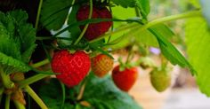 Looking For Truly Effective Organic Gardening Tips? Read On! | Farmer Life