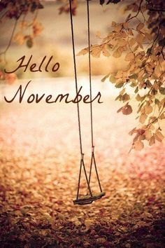 Hello November                                                                                                                                                                                 More