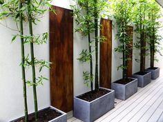 Modern planters: Backyard bamboo planter box framed with wood panels