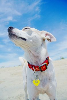 Keep your dog safe this Summer, here are 6 easy tips on how to beat the heat and avoid heat related injuries or worse