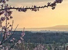 #balatonfelvidek #hungary #balatonakali #almondblossom #hills #nature #lake #balaton #mik #instadaily #lights Almond Blossom, Hungary, Bali, Moose Art, Lights, Mountains, Nature, Photos, Instagram