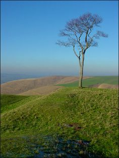 The lonely tree on Roundway Hill