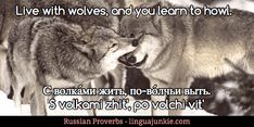 Top 40 Russian Idioms, Proverbs & Sayings. Part 4. | LinguaJunkie.com