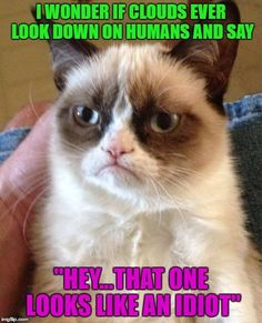 """Grumpy Cat...The Philosopher ... Philosopher Week - A NemoNeem1221 Event - May 15-21   I WONDER IF CLOUDS EVER LOOK DOWN ON HUMANS AND SAY """"HEY...THAT ONE LOOKS LIKE AN IDIOT""""   image tagged in memes,grumpy cat,cats,funny,animals,philosopher week   made w/ Imgflip meme maker"""