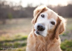 Such a sweet face! Photograph by McGraw Photography