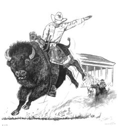 Cowboy Riding a Bison Buffalo Western Man in Chaps Hat