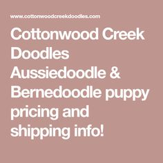 Cottonwood Creek Doodles Aussiedoodle & Bernedoodle puppy pricing and shipping info!