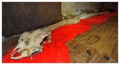 """Bizarre Remains Of """"dragon Skeleton"""" Discovered In Chinese Sea"""