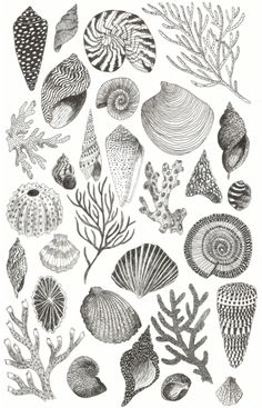 Caitlin Foster Shells poster, 2015