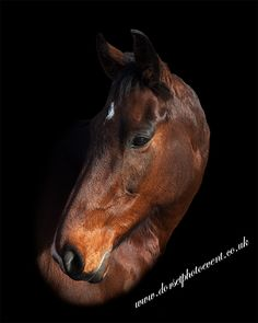 Fine Art Equestrian Portraits and Stable Visits - Horse Photographer UK Horse Photography, Great Memories, Stables, Family Portraits, Equestrian, First Love, Horses, Fine Art, Animals