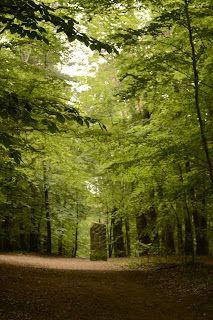 En camino al #Humbergturm ... entrando al bosque palatino.