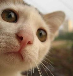 I look you! - Lovely Cats