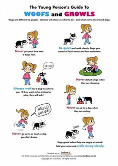 Children, how to interact with dogs