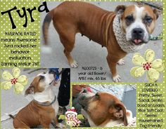 TYRA – A1100723 Sweet dog girl, very gentle and affectionate, beginners dog, is on death list today! If you would like to foster or adopt and can't make it to the shelter, please write an email NOW to the Urgent Help Desk at Helpdogs@Urgentpodr.org Their experienced volunteers will assist you one-on-one with rescues and the application process. Transport can be arranged by rescues to the homes of approved fosters or adopters within 3-4 hours of New York City