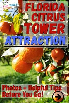 A popular attraction since 1956, the Florida Citrus Tower in Clermont, FL is definitely worth a visit! It's about 30 minutes from Orlando -- a nice leisurely drive through orange groves along rolling hills, lakes, and wetlands. This is REAL Florida... and you can see it all from atop this 226-foot tall tower! See my photos and tips before you go.