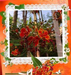 🌼 Caesalpinia Pulcherrima - Flor-de-pavão ou Flamboyanzinho Nara City, Table Decorations, Blog, Home Decor, Purple Flowers, Animals, Wild Flowers, Decoration Home, Room Decor