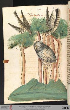 Poor owl is being mobbed by other birds. Universitätsbibliothek Heidelberg, Cod. Pal. germ. 300: Universitätsbibliothek Heidelberg, Cod. Pal. germ. 300 Konrad von Megenberg: Das Buch der Natur (Hagenau - Werkstatt Diebold Lauber, um 1442-1448?)