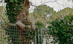 albero e ringhiera 1