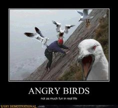 Angry Birds. Not so much fun in real life.  @Mariann Modjeski, this would freak Pat out!  Pull it out when he's being bad.