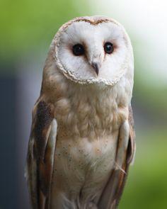 wise owl by Matthew Mallett.