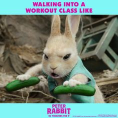 Search for screenings / showtimes and book tickets for Peter Rabbit. See the release date and trailer. The Official Showtimes Destination brought to you by Sony Pictures. Peter Rabbit Movie, Funny Cute, Hilarious, Animals And Pets, Cute Animals, Workout Memes, Movie Tickets, Gym Humor, Just For Laughs