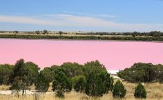 Lake Retba or Lac Rose lies north of the Cap Vert peninsula of Senegal, north east of Dakar. It is so named for its pink waters, caused by Dunaliella salina in the water. The color is particularly visible during the dry season. The lake is also known for its high salt content, which, like that of the Dead Sea, allows people to float easily.