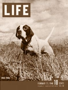 Life - Best bird dogs 1946