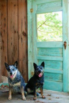 Blue Dogs....Blue Door   Flickr - Photo Sharing!