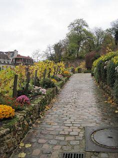 Clos de Montmartre vineyard, the only vineyard within Paris city limits.