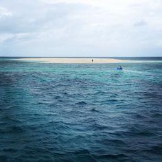 Plonger et se poser sur une île perdue dans la barrière de corail CAIRNS  #Australia #Queensland #Cairns #grandebarrièredecorail #greatbarrierreef #island #snorkeling #diving by sarah.crespel http://ift.tt/1UokkV2
