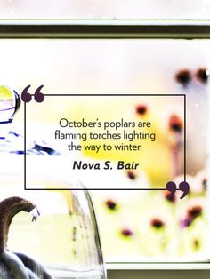 "Fall quotes: ""October's poplars are flaming torches lighting the way to winter."" -Nova S."