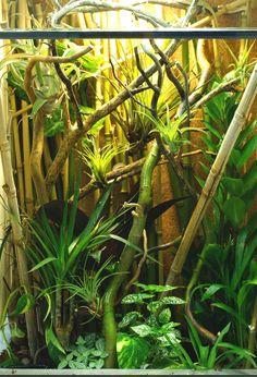 71 Best Vivarium Bamboo Images Bamboo Poison Dart Frogs Vivarium