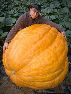 Image: Giant pumpkin (© Patrick Pleul/Corbis)