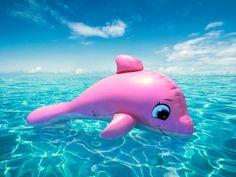 Pink Whale ---CUTIE