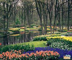 O parque de Keukenhof é localizado na Holanda e abriga aproximadamente sete milhões de flores. As tulipas são as espécies mais vistas entre os caminhos coloridos e perfeitamente desenvolvidos para surpreender. Que tal apreciar esta vista nesta tarde de quinta-feira? <3