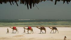 On the beach of Senegal.
